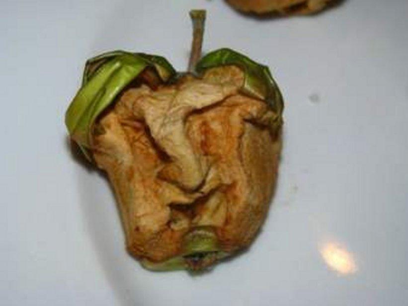 Cruz rotten apple_big