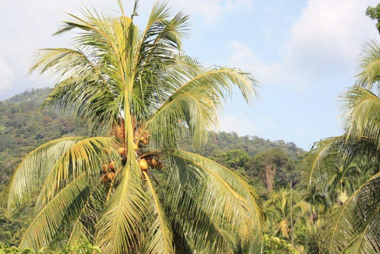 Lombok indonesia kokemuksia