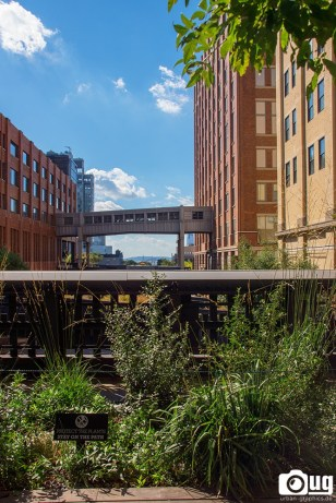 New York City Highline (10)