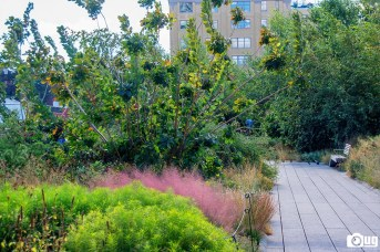 New York City Highline (13)