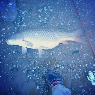 carp fishin'