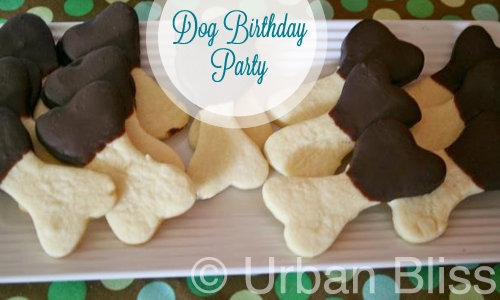 Dog Birthday_04