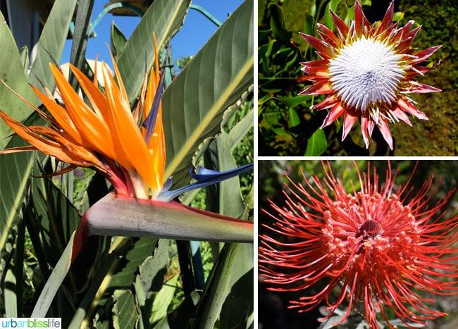 Travel Bliss: Hawaii Island, Aikane Coffee Plantation flowers