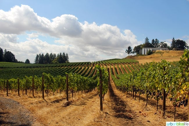 Durant Vineyards winery on UrbanBlissLife.com