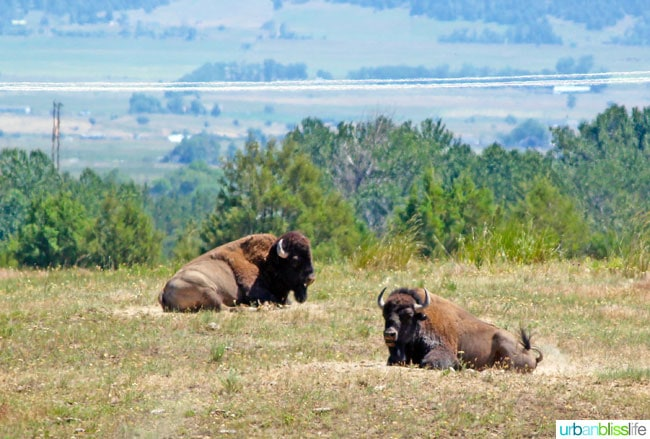 Travel: National Bison Range, Montana on UrbanBlissLife.com
