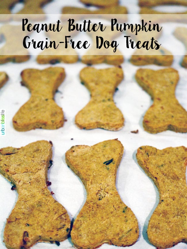 Peanut Butter Pumpkin Grain Free Dog Treats recipe on UrbanBlissLife.com