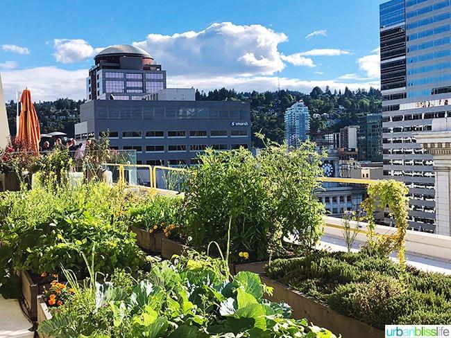 view from Departure restaurant rooftop garden