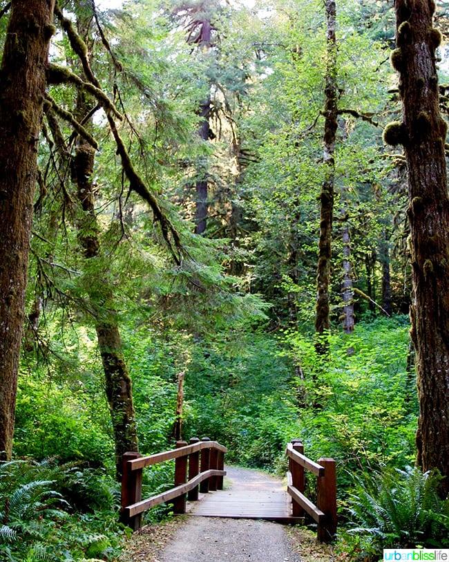 small bridge at Silver Falls State Park