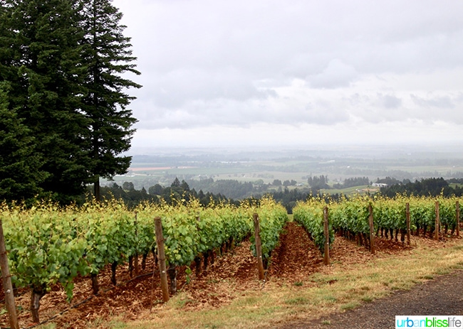Dundee Hills Domaine Drouhin Winery