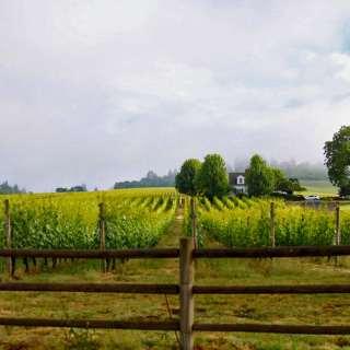 Dundee Hills Stoller Family Estate Wine