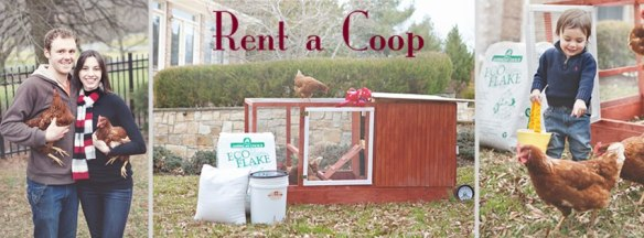 Rent-a-Coop - Tyler Phillips