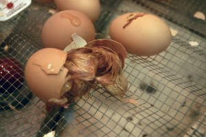 Hatching Egg 4 - photo by ~Pawsitive~Candie_N