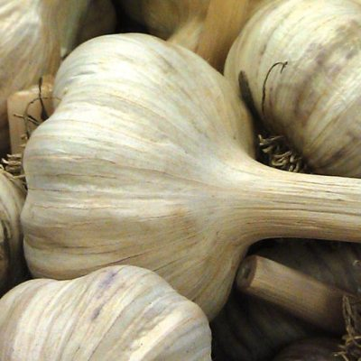 Video: Planting Garlic with Botanical Interests