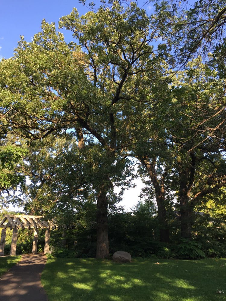The Washington Bicentennial Tree is located near the north end of the pergola on the south bank of the creek.