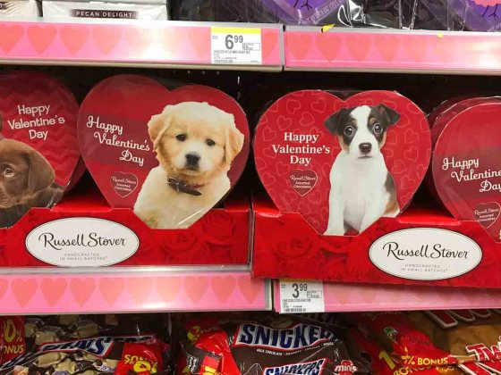 dogs and valentines candy