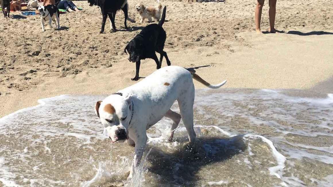 Haulover Dog Beach