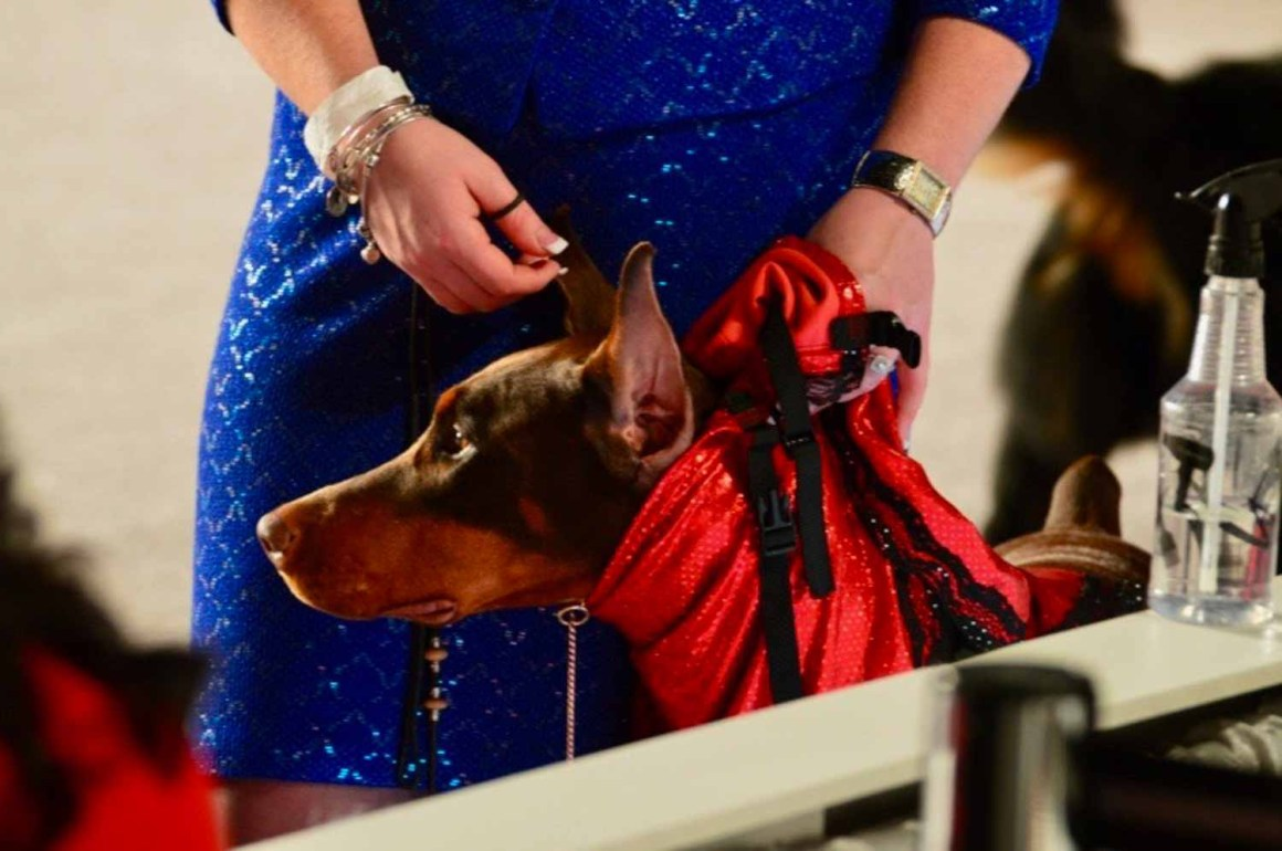 Ringside at the American Kennel Club National Championship