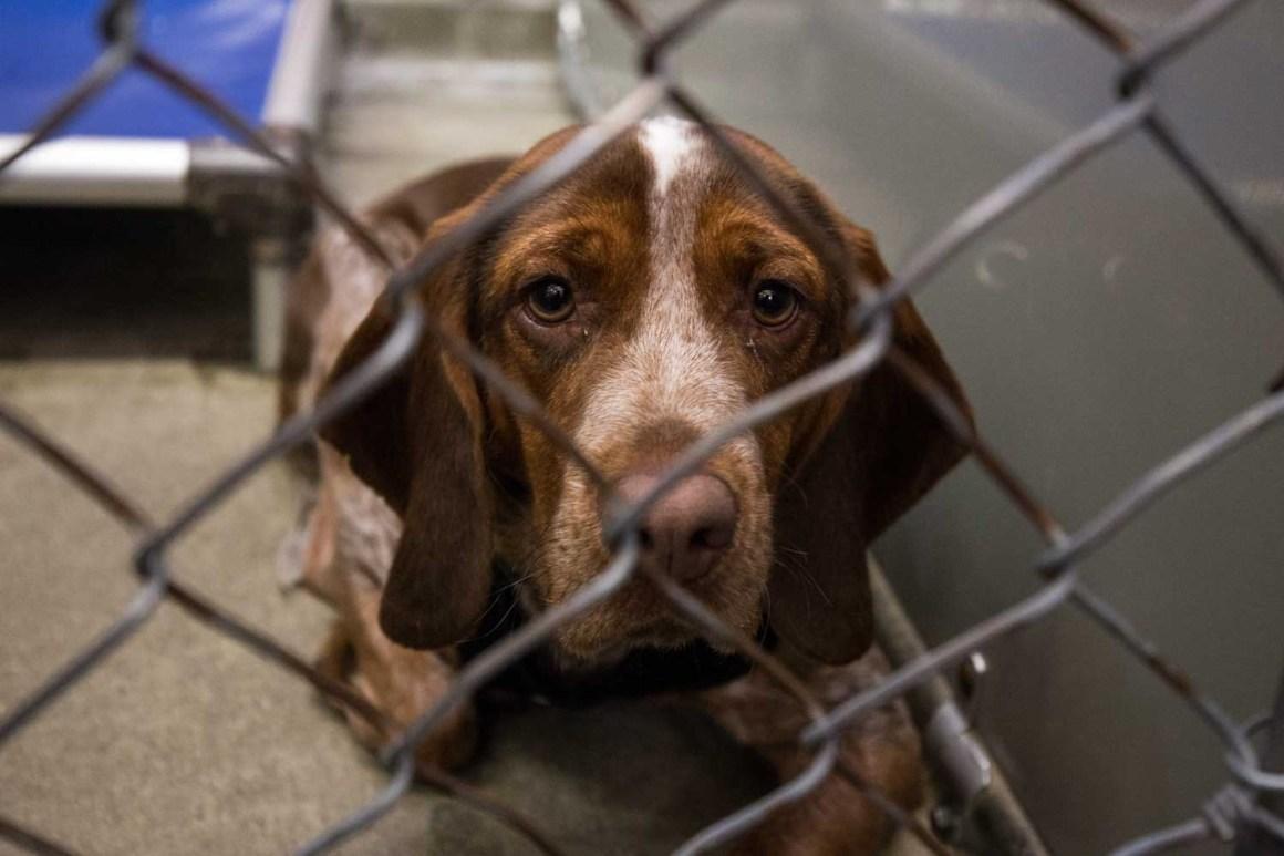 North Shore Animal League America Global Pet Adoptathon (Photo: Natalie Siebers)
