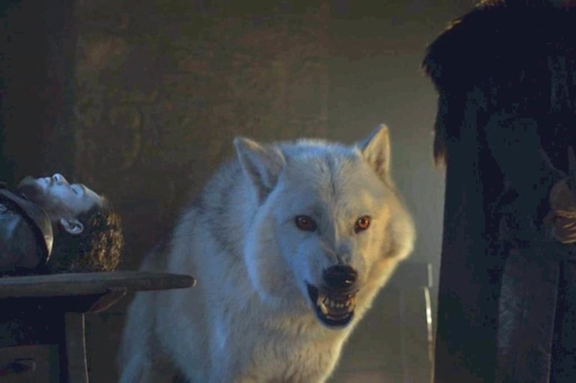 Ghost Game of Thrones Dogs in the News