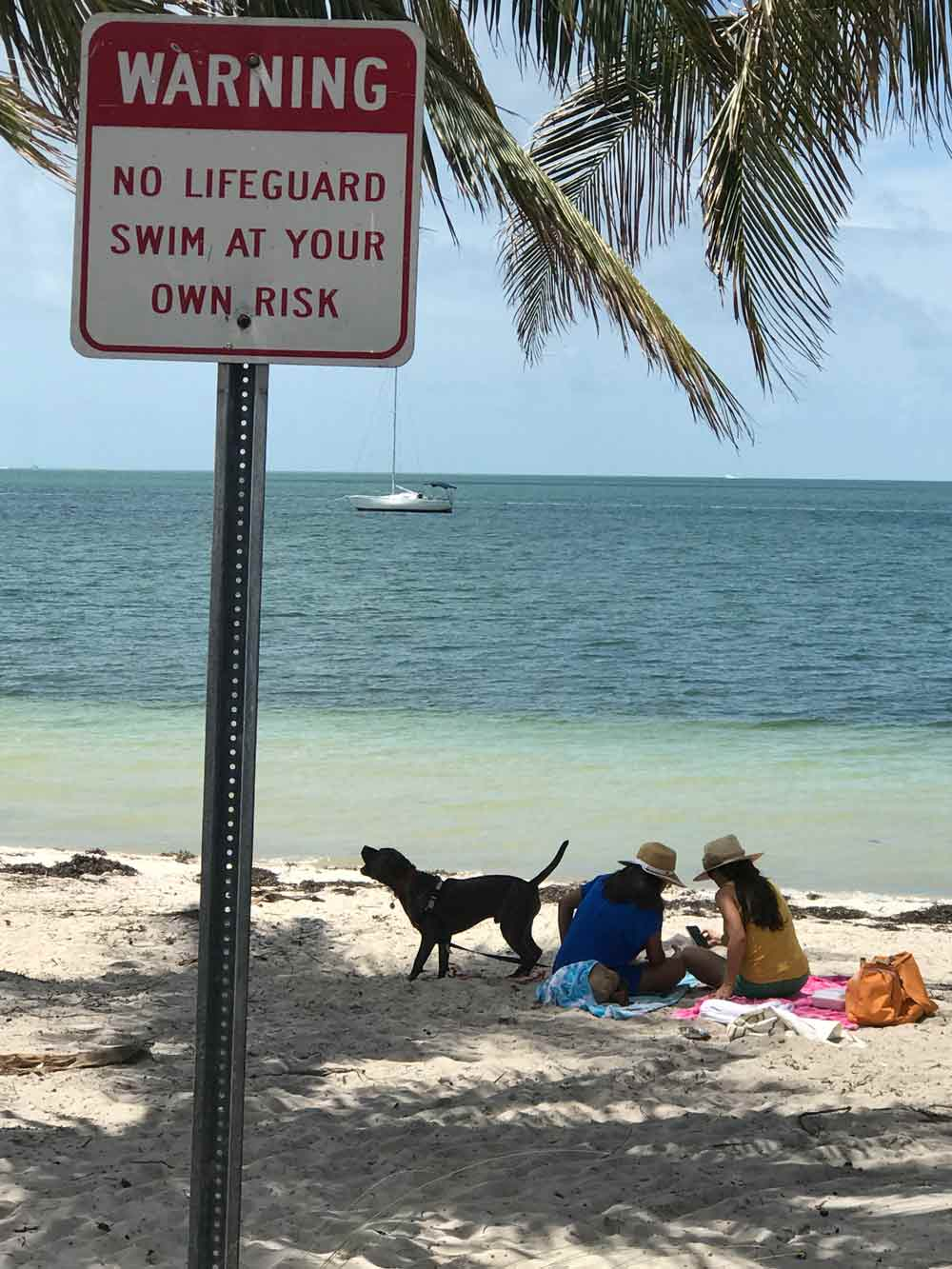 Five Things to do In Miami with Your Dog