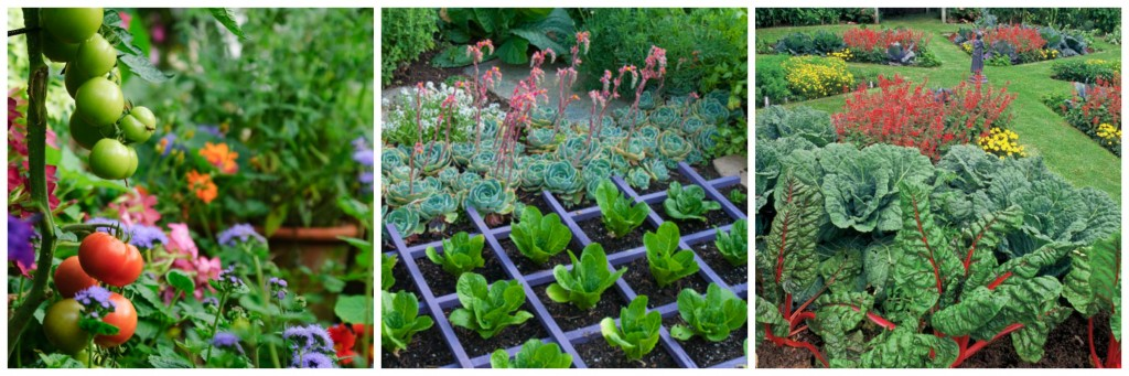 what is edible landscaping
