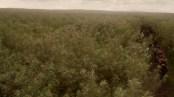 La mer Dothraki (© HBO)
