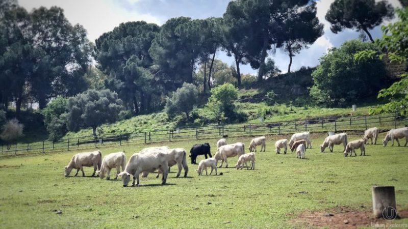 Así son la finca Huerta y el asador «La Perdida» en Alcalá de Guadaíra