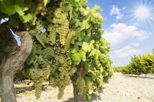 introducción a los vinos de Jerez