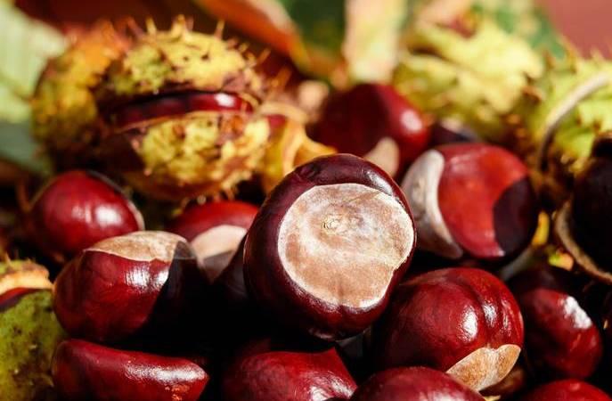 El magosto y la gastronomía de El Bierzo