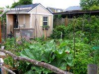 Another Backyard Thanksgiving - Urban Farm HubUrban Farm Hub
