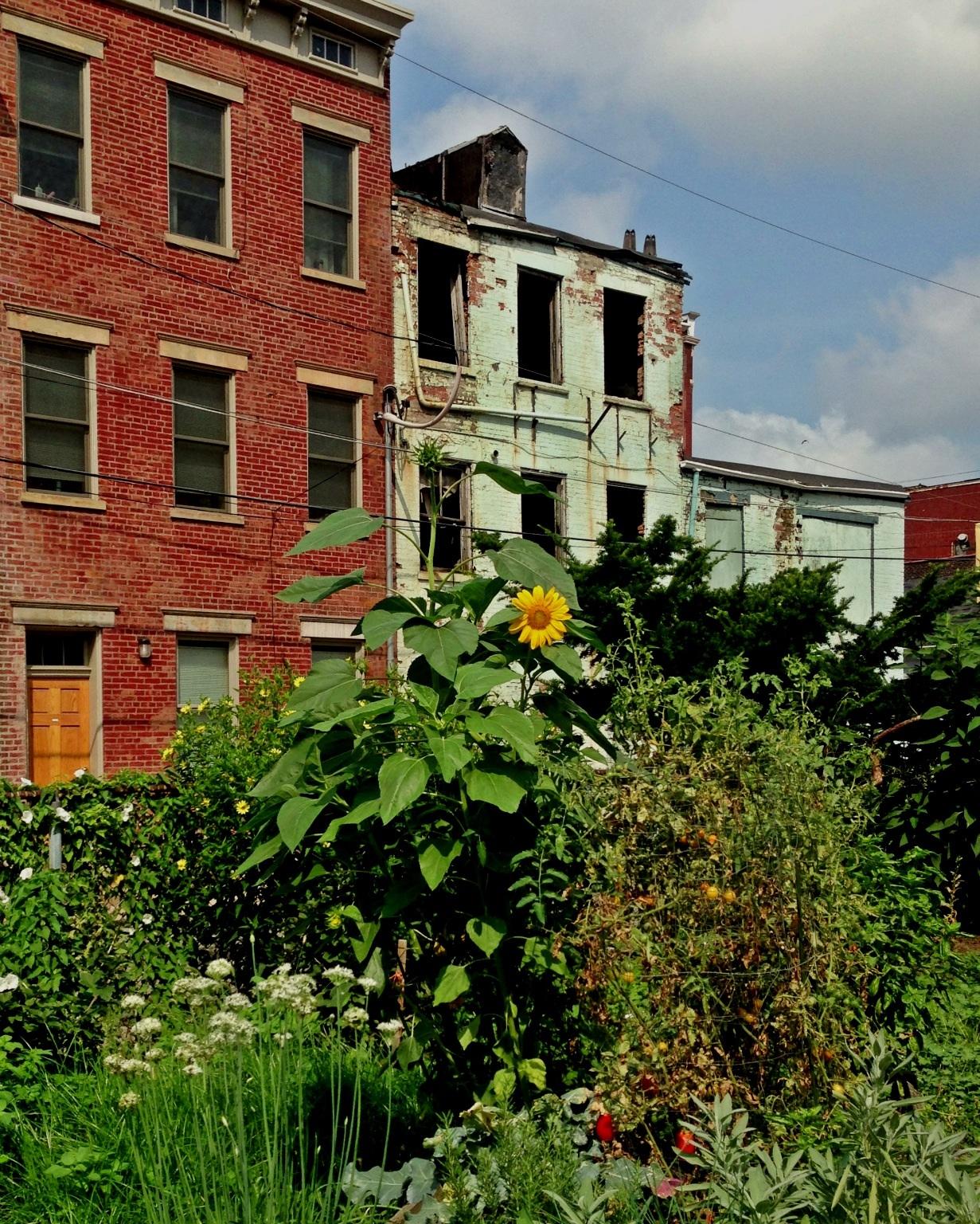 Cincinnati's Community Garden Program