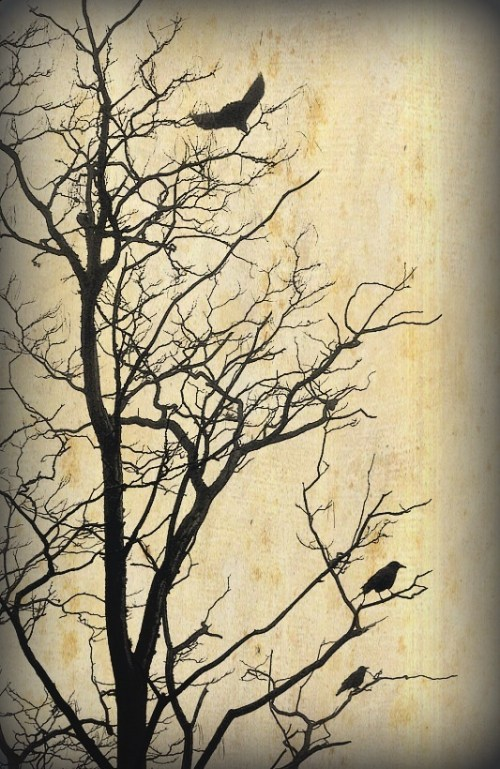 A favorite with crows.