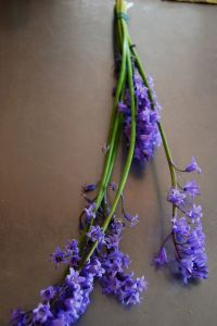 Bluebells dry well to a deep lavender color.
