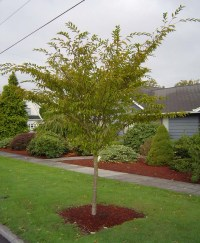 1 Landscaping: Landscaping Small Trees Pictures