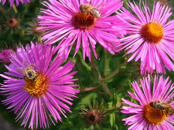 bright_flower_bees