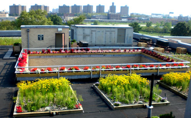 field trip to nyc 39 s 4th largest green roof urban gardens. Black Bedroom Furniture Sets. Home Design Ideas