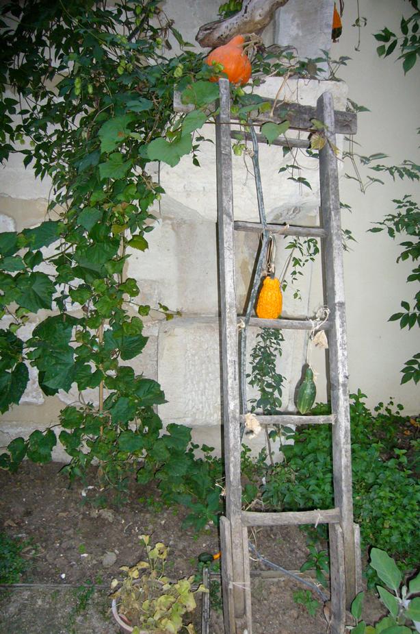 pot_oiseaux_ladder