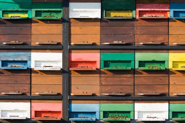 beeboxes4