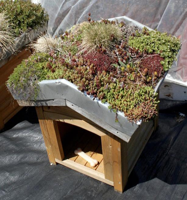 eco chic pet houses offer creature comforts green roof dog cat rh urbangardensweb com