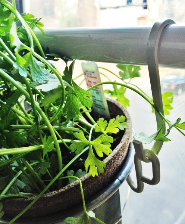 DIY Window Herb Garden From IKEA Pots - Urban Gardens