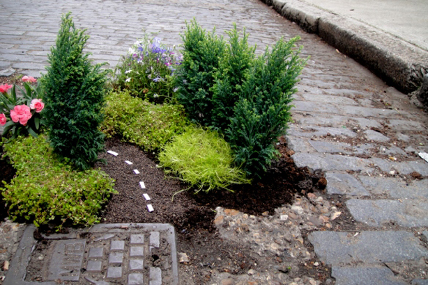 UK pothole gardener extraordinaire, Steve Wheen's guerrilla gardening installation