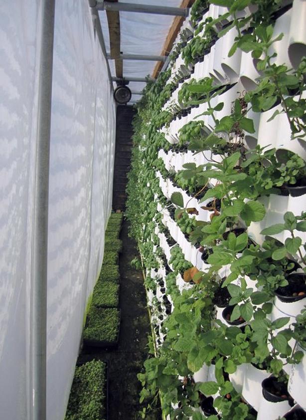 farmery-vertical-farming