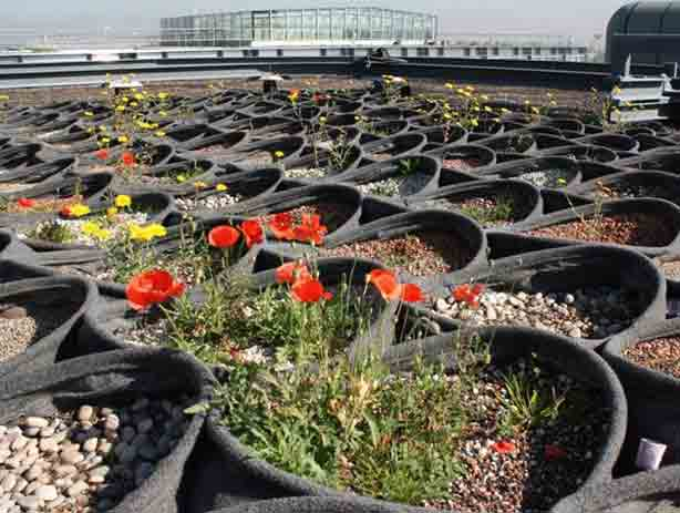 pocket-habitat-britishland-september-flowering