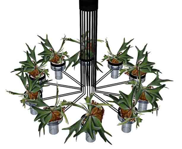 flora-chandelier1