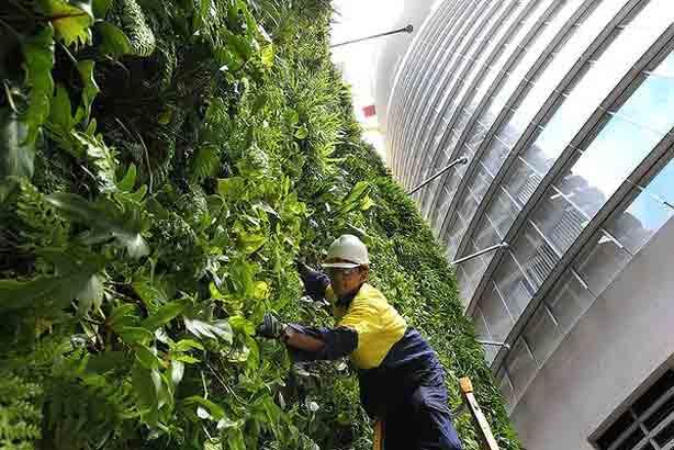 tending-green-wall_614