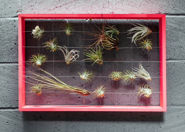 CHELSEA_FRINGE_squint-popup-screen-air-plants3