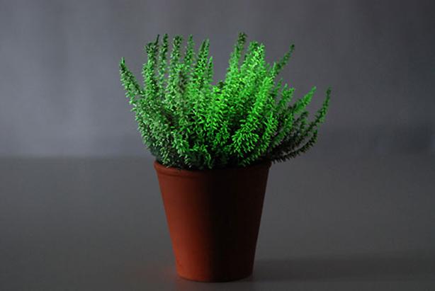 bioluminescent-tree-nextnature
