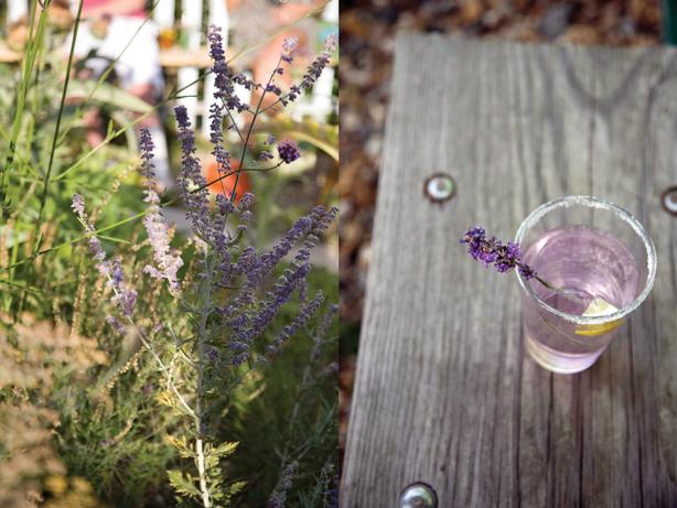 garden-to-table-drinks-lottie-muir