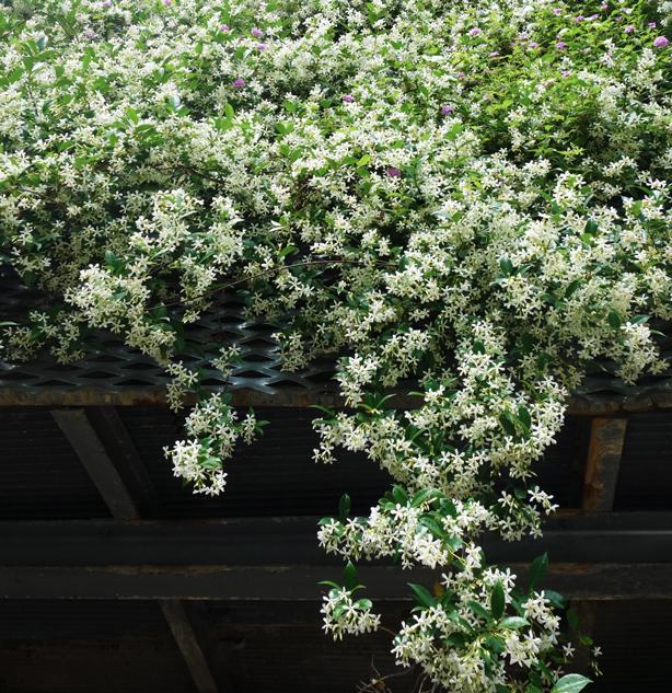 green-side-wall-fragrant-vines-jardi-tarradallas-urbangardensweb