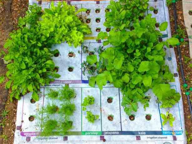 nourishmat-growing-8191d28f7bfec345cc859b02e6c4fe00afcae450-s6-c30